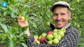 Æblefest på DR2 - helt ind til kernen DR TV